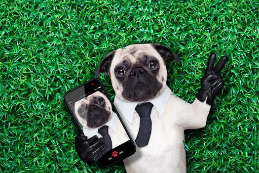 selfie pug dog