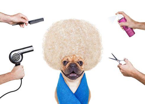 haircut dog