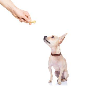 dog treat