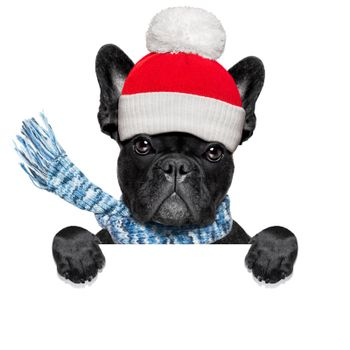 freezing  winter dog