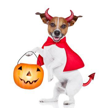 trick or treat dog