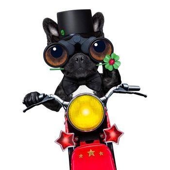 motor bike good luck dog
