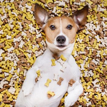 hungry dog in big  food mound