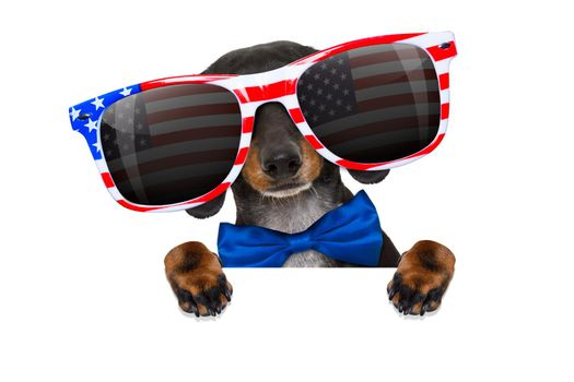 dachshund sausage dog wearing sunglasses of usa  on  independence day 4th of july, reflections on  glasses, isolated on white background