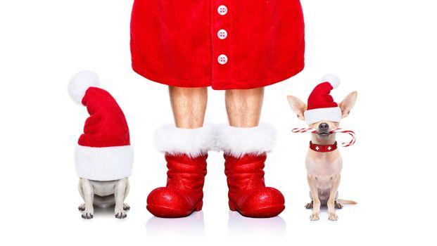 christmas santa claus dogs