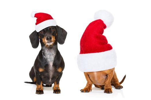 couple of  dogs on christmas holidays
