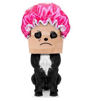 bad hairdo on dog