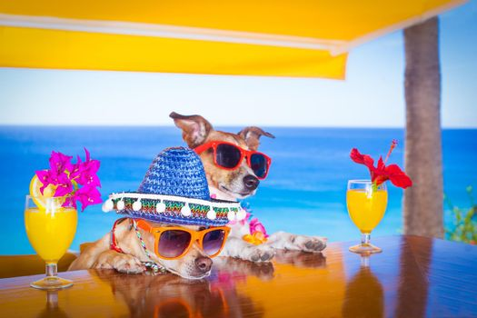cocktail drink dogs summer holiday vacation ar the bar