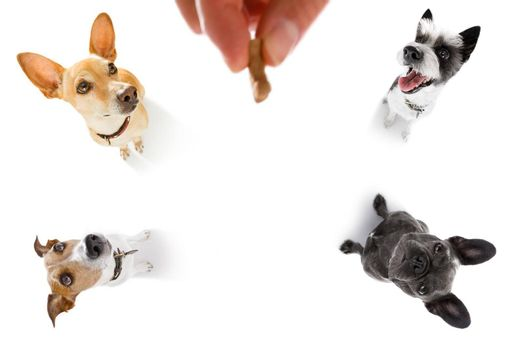 dogs  treat with owner