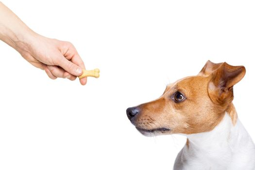 hungry dog with treat