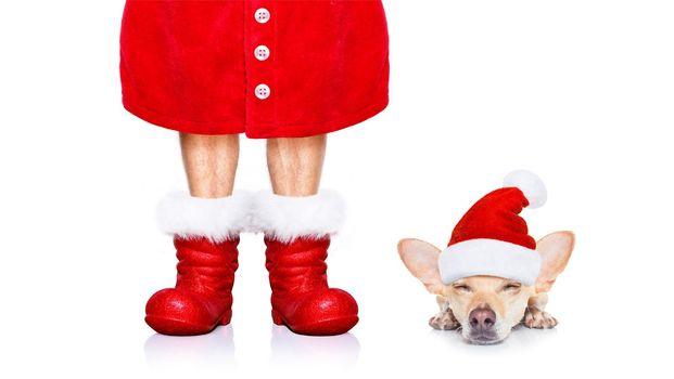 christmas santa claus dog