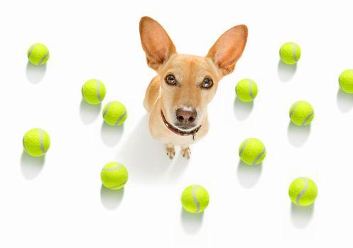 tennis tournament dog