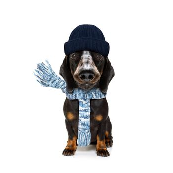 freezing dog with wool scarf and cap