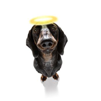 angel saint dog with halo