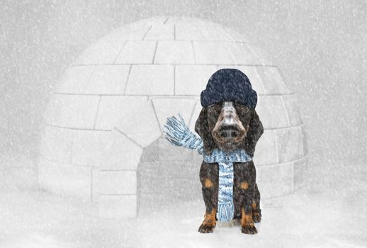 freezing icy dog in snow and igloo