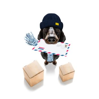 dog mail deliver   postal post man