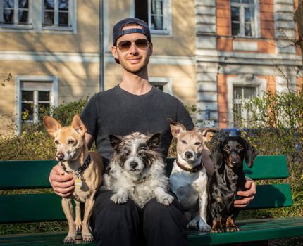 obedient dogs with trainer and  owner sitting on a bank