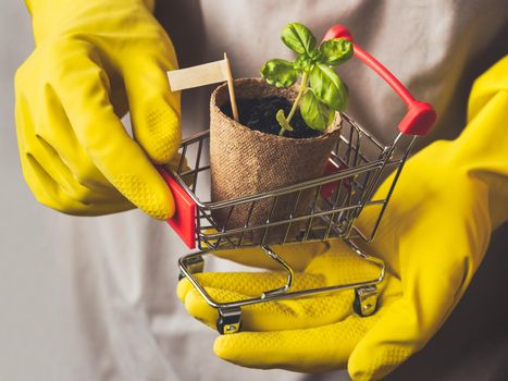 Man in yellow rubber gloves holds shopping cart with basil seedling and sign. Spring sale in mall and flower shops. Season of growing seedlings and planting plants in the ground.