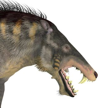 Entelodont was an omnivorous pig that lived during the Eocene and Oligocene Periods of Europe, Eurasia and Asia.
