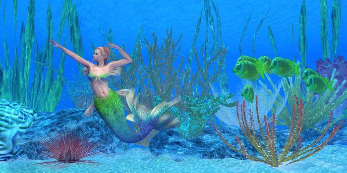 A school of Lemonpeel Angelfish watch as a beautiful mermaid swims near a underwater reef.