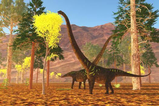 Mamenchisaurus youngi sauropod dinosaurs munch on trees during the Jurassic Period of China.