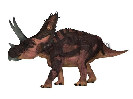 The Ceratopsian herbivorous dinosaur Agujaceratops lived in Texas, USA during the Cretaceous Period.