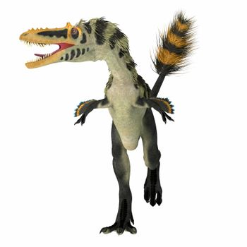 Alioramus altai was a theropod carnivorous dinosaur that lived Mongolia during the Cretaceous Period.