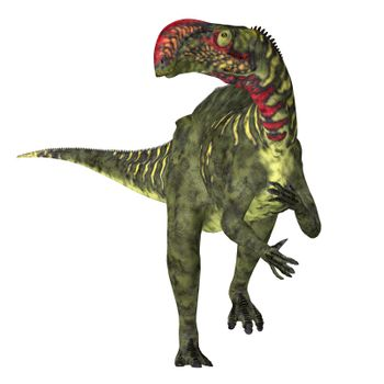 Altirhinus was a duck-billed iguanodont herbivorous dinosaur that lived in Mongolia during the Cretaceous Period.