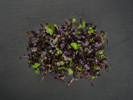 Purple radish microgreen on black slate board