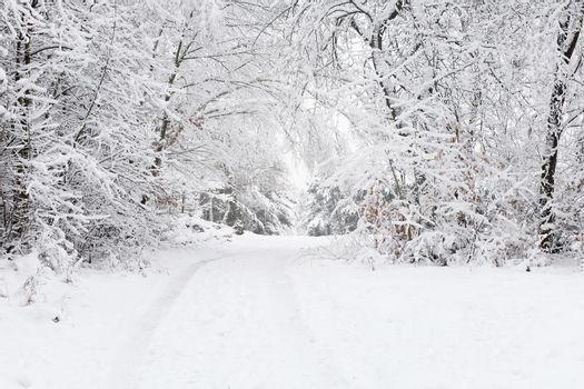 Snowy Way In Wintry Forest