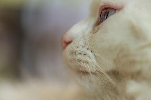 Cat eyes close up.