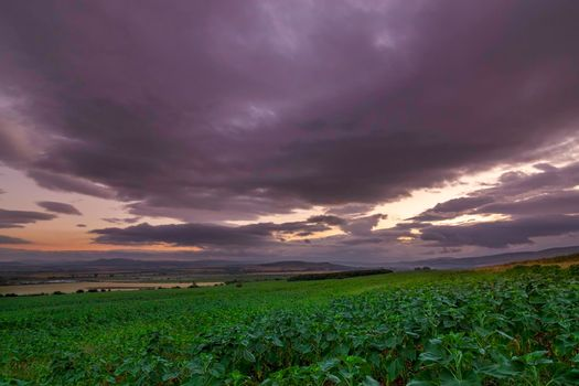 Majestic sunset over sunflowers field