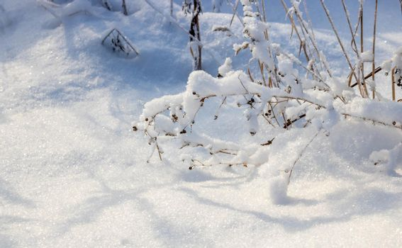 Dry grass bent under the weight of snow, snowy natural landscape.