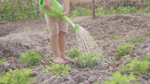 Asian little child boy preschool growing to learn watering the plant tree outside. Kid planting and waters vegetables on garden, Forestry environments concept