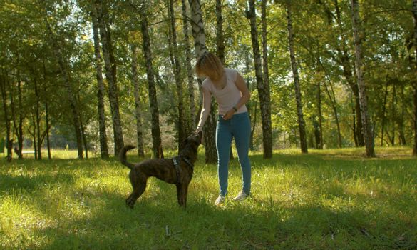 Young beautiful woman stroking her clever dog