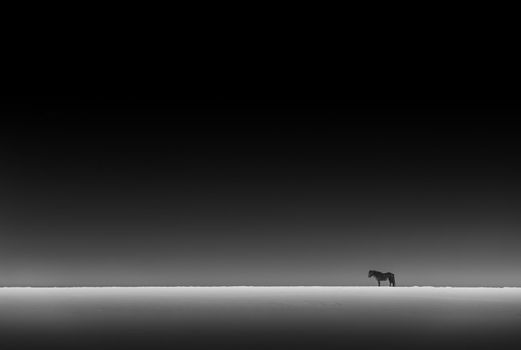 Black and White Photo of a Horse Standing in the Distance in the Snowy Icelandic Fields at Night. Amazing Wild Nature of Iceland.