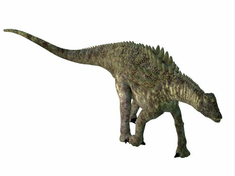 Ampelosaurus was an armored sauropod herbivorous dinosaur that lived in Europe during the Cretaceous Period.