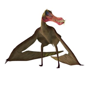 The flying predatory Pterosaur Anhanguera lived in North Africa during the Cretaceous Period and hunted fish.