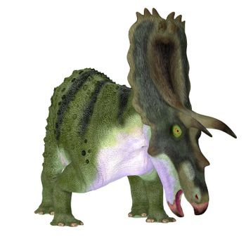 The Ceratopsian herbivorous dinosaur Anchiceratops lived in Alberta, Canada during the Cretaceous period.