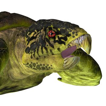The extinct marine Archelon Turtle lived in the seas of South Dakota, USA during the Cretaceous Period.