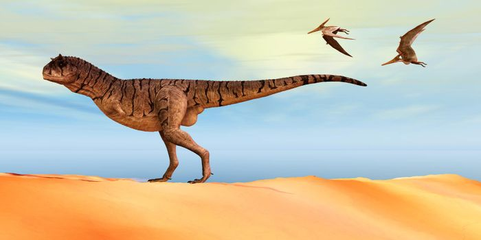 Pteranodon flying reptiles follow a Carnotaurus theropod dinosaur on the hunt for his next prey during the Cretaceous Period.