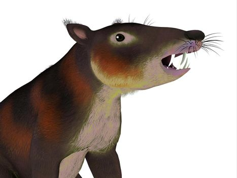 Cronopio is an extinct carnivorous mammal that lived in South America during the Cretaceous Period.