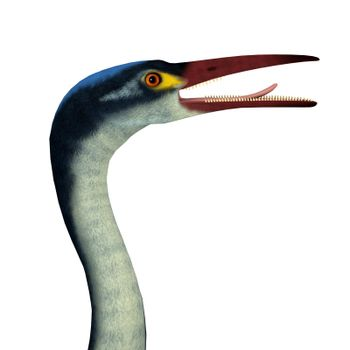 Hesperornis is an extinct cormorant-like bird that lived in North America and Russia during the Cretaceous Period.