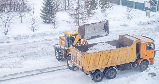 Big yellow tractor cleans up snow from the road and loads it into the truck. Cleaning and cleaning of roads in the city from snow in winter
