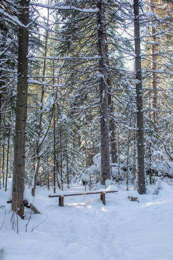 Winter road in a snow-covered forest, tall trees along the road. There's a lot of snow on the trees. In the forest, a wooden bench for recreation. The concept of the winter season.