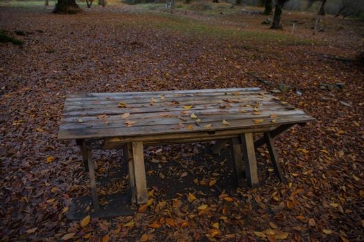 Old wooden table top with leaves falling in forest, autumn background. Autumn concept.