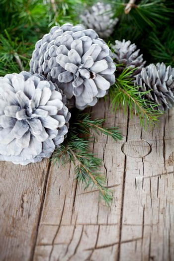Evergreen fir tree branch and white pine cones closeup on wooden background.