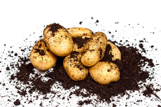 Newly harvested potatoes and soil on white background.