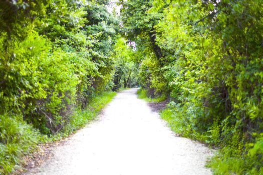 Walkway lane path with green trees in summer forest.