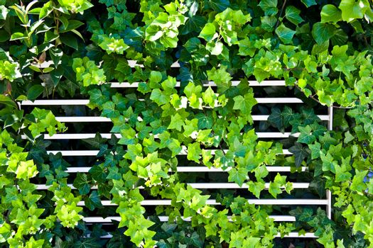 Green summer leaves and white fence pattern background.